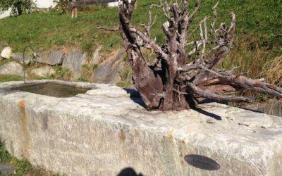 Rätselwandern: Yaks & ein Baum